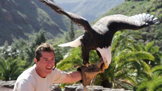 A handler with an eagle. Can you own a lifeform?