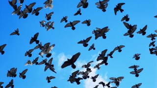 Many birds in the air
