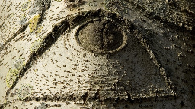 Tree bark in ominous close-up shape